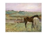 Horses in a Meadow Giclee Print by Edgar Degas