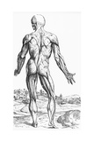 Woodcut Illustration of the Superficial Muscles in Posterior View Giclée-Druck von Andreas Vesalius
