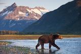 Brown Bear, Katmai National Park, Alaska Stampa fotografica di Paul Souders