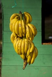 Bananas at a Fruit Stand in Dominican Republic Fotografie-Druck von Paul Souders