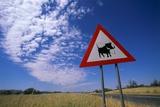 Warthog Crossing Sign Fotografie-Druck von Paul Souders