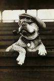 Dog Wearing Hat and Goggles Fotografie-Druck