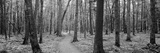 Usa, Michigan, Black River National Forest, Walkway Running Through a Forest Photographic Print