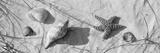 Close-Up of a Starfish and Seashells on the Beach  Dauphin Island  Alabama  USA