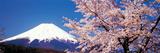 Mt Fuji Cherry Blossoms Yamanashi Japan Photographic Print