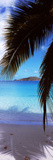 Palm Tree on the Beach, Maho Bay, Virgin Islands National Park, St. John, Us Virgin Islands Stampa fotografica
