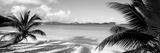 Palm Trees on the Beach, Us Virgin Islands, USA Fotoprint