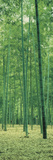 Bamboo Forest Nagaokakyo Kyoto Japan Toile tendue sur châssis