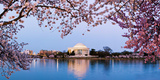 Cherry Blossom Tree with a Memorial in the Background, Jefferson Memorial, Washington Dc, USA Premium Photographic Print