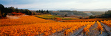 Vineyards in the Late Afternoon Autumn Light, Provence-Alpes-Cote D'Azur, France Photographic Print