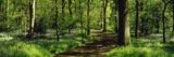 Bluebell Wood Yorkshire England Trykk på strukket lerret