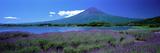 Lavender and Lake Kawaguchi Yamanashi Japan Fotografisk trykk
