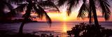Palm Trees on the Coast, Kohala Coast, Big Island, Hawaii, USA Lámina fotográfica