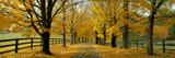 Autumn Trees Near Waynesboro Virginia USA Fotografisk trykk