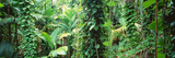 Vegetation Seychelles Fotografisk tryk