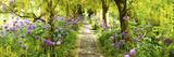 Laburnum Trees at Barnsley House Gardens, Gloucestershire, England Sträckt kanvastryck