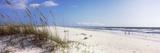 Tall Grass on the Beach, Perdido Key Area, Gulf Islands National Seashore, Pensacola, Florida, USA Fotografie-Druck