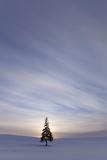 Evergreen Tree in Snowy Field, Biei, Hokkaido, Japan Fotografisk tryk