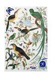 Exotic Parrots Lámina giclée