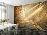 Waldweg im Herbst Fototapete Wandgemälde