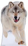 Wolf Figura de cartón
