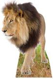 Lion Figura de cartón