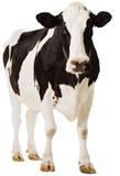 Vache Silhouettes découpées en carton