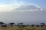 Elephants in Front of Mount Kilimanjaro, Kenya Fotografisk tryk af Paul Joynson