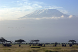 Elephants in Front of Mount Kilimanjaro, Kenya Fotografie-Druck von Paul Joynson