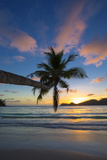 Palm Trees and Tropical Beach, Southern Mahe, Seychelles Photographic Print by Jon Arnold