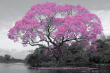 Tree - Blossom Print