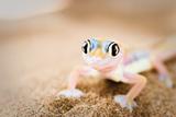 Dune Gecko II Fotografisk trykk av Beth Wold