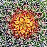 Saguaro Mandala II Photographic Print by Douglas Taylor