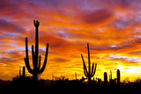 October Sunset Fotografisk trykk av Douglas Taylor