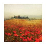 Tuscan Poppies Premium Giclee Print by Amy Melious