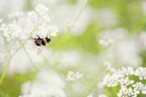 Honey Bee Photographic Print by Roberta Murray