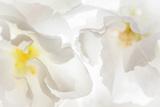 Cherry Blossoms II Impressão fotográfica por Kathy Mahan