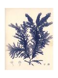 Blue Botanical Study IV Giclée-Premiumdruck von Kimberly Poloson