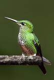Hummingbird III Photographic Print by Larry Malvin