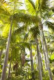 Tropical Oasis I Fotografisk tryk af Karyn Millet