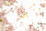 In Bloom XVII Impressão fotográfica por Karyn Millet