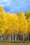 Colorado Color II Fotoprint van Douglas Taylor