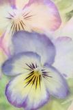 Victorian Flowers Impressão fotográfica por Roberta Murray