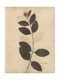 Pressed Botanical I Kunstdrucke von Kimberly Poloson