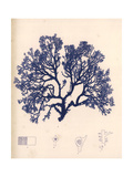 Blue Botanical Study I Giclée-Premiumdruck von Kimberly Poloson
