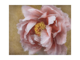 Pink Peony Poster by Amy Melious