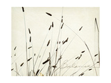 Grass Balance Premium Giclee Print by Amy Melious