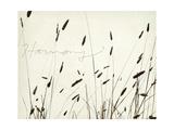 Grass Harmony Giclée-Premiumdruck von Amy Melious