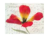 Bloom II Giclée-Premiumdruck von Amy Melious