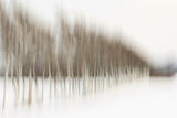 Birch Blur I Photographic Print by Larry Malvin